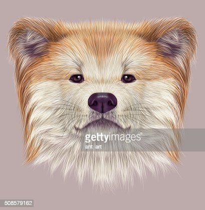 Akita Inu Japanese Dog. : Stock Illustration