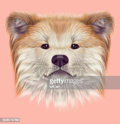 Akita Inu Japanese Dog. : Stock Illustration