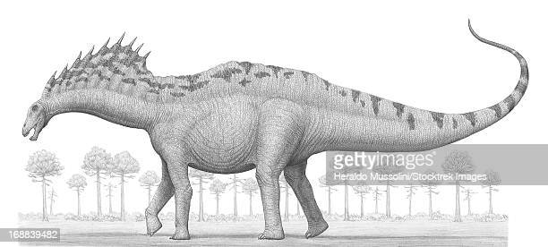 Amargasaurus cazaui, a sauropod dinosaur from the Early Cretaceous Period.