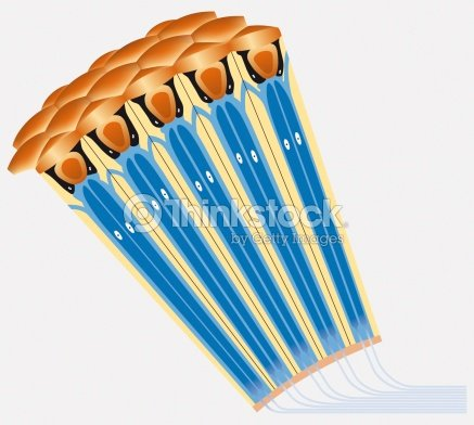 An eye of a bee crosssection diagram stock illustration thinkstock an eye of a bee cross section diagram stock illustration ccuart Images