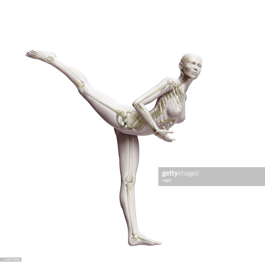 Anatomical ballet model : Stock Illustration