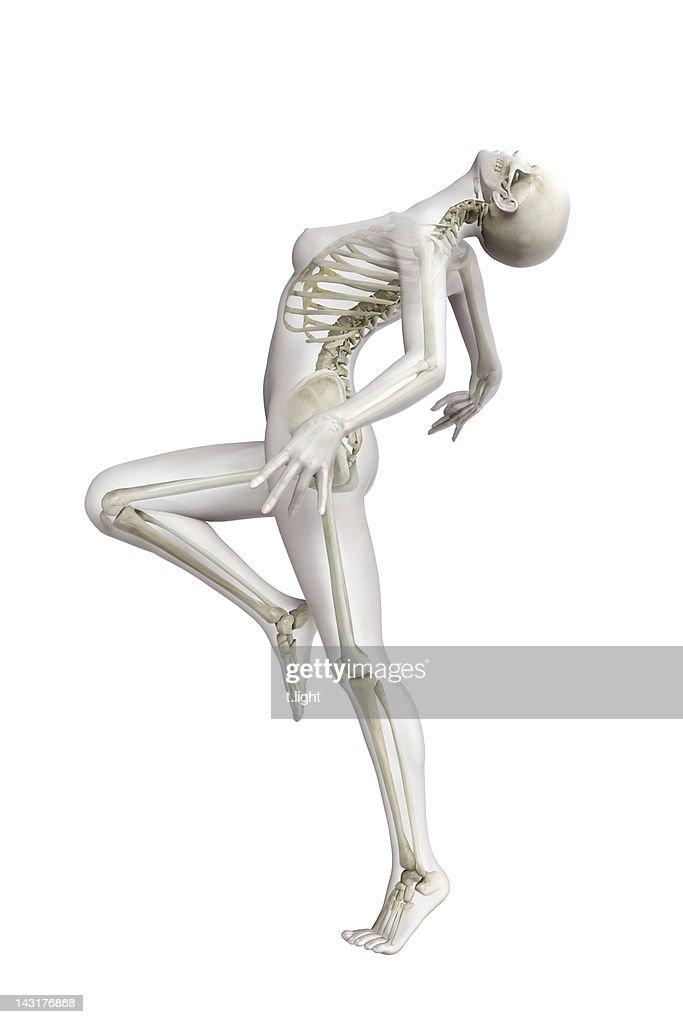 Anatomical model : Stock Illustration