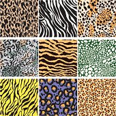 'A Vector Illustration of Collection of animal pattern.6 Different  based on Tiger,Leopard,Jaguar,Snake,'