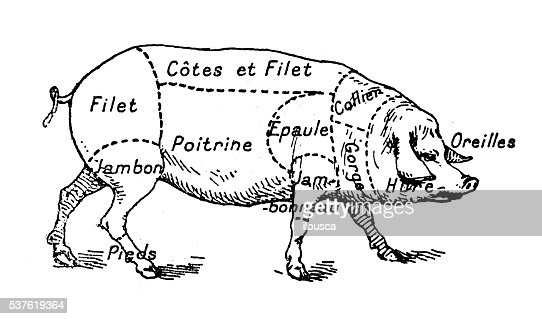 antique illustration of pork swine pig meat section stock illustration