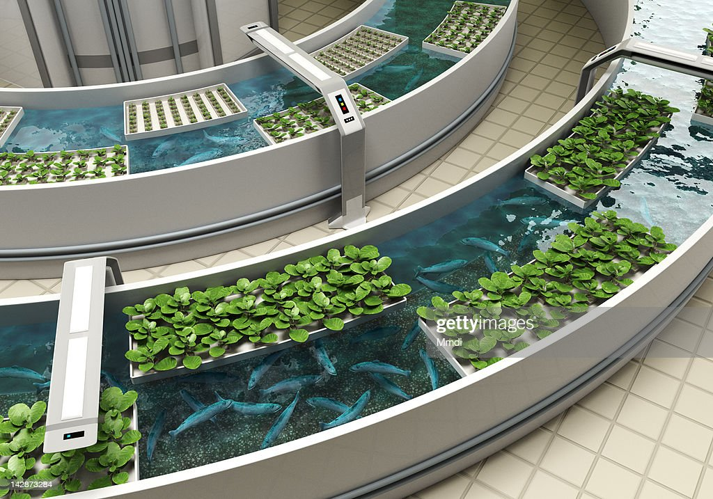Aquaponics Detail : Stock Illustration