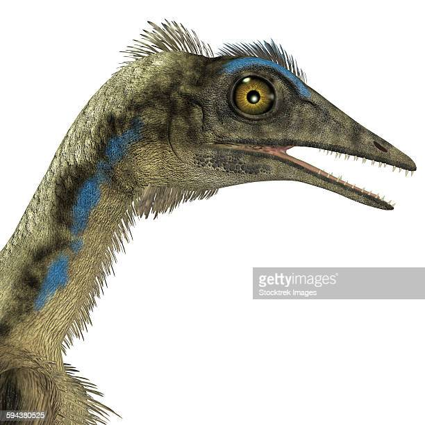 Archaeopteryx is a carnivorous bird that lived during the Jurassic period of Germany.