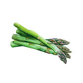 A group of asparagus. isolated on a white background. watercolor illustration.