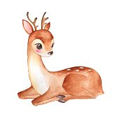 Baby Deer. Cute fawn. Watercolor illustration