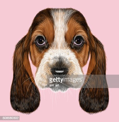 Basset Hound Dog. : Stock Illustration