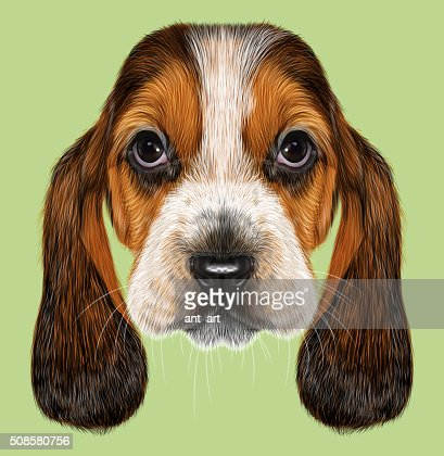 Basset Bracke Hund. : Stock-Illustration