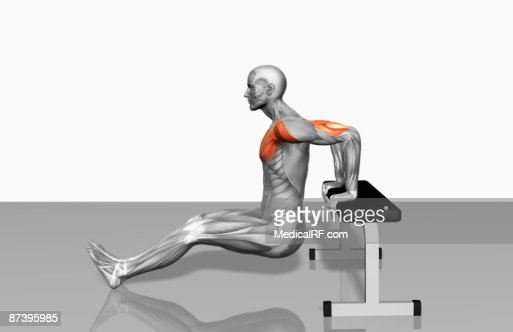 Bench dips (Part 1 of 2) : Stock Illustration