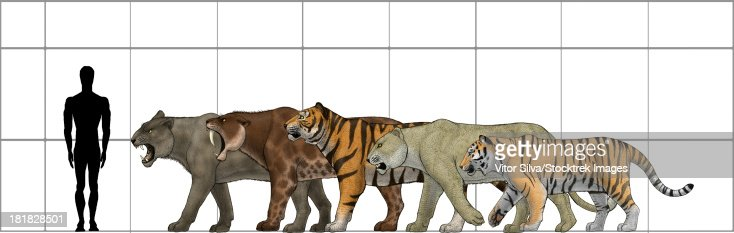 Big Felines Size Chart Featuring Panthera Leo Atrox ...
