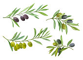 Olives set. Olive branch with berries. Watercolor illustration