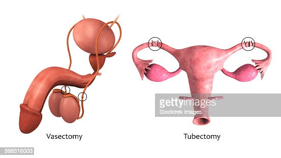 download Atlas of Stem Anatomy in Herbs,