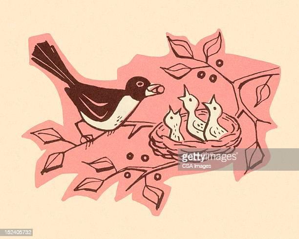 Bird Feeding Baby Bird