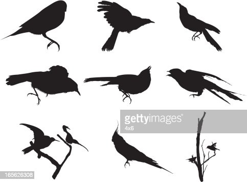 Bird Silhouette Vector Art | Getty Images