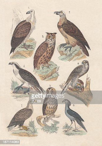 Birds of prey, hand-colored lithograph, published in 1880