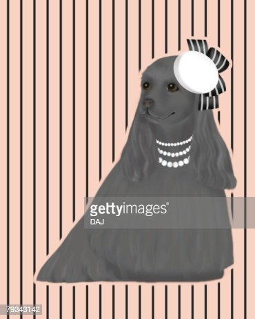 Black American Cocker Spaniel wearing hat and necklaces, front view : Stock Illustration