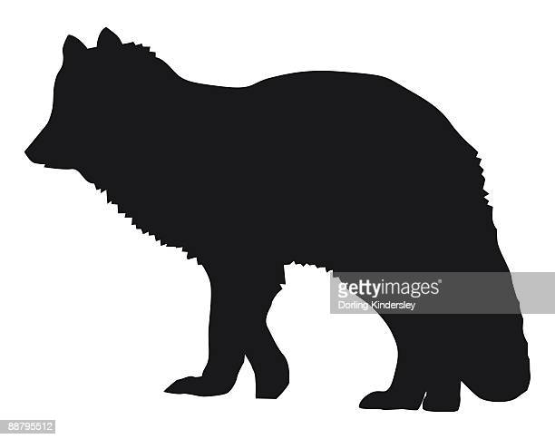 Arctic Fox Stock Illustrations And Cartoons | Getty Images