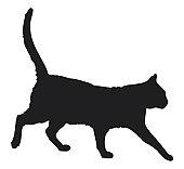 Black and white digital illustration of black domestic cat (Felis catus)