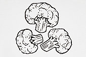 Black and white illustration of cauliflower florets