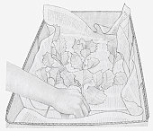 Black and white illustration of dried leaves being placed in box, on a layer of newspaper (storing dried plants)