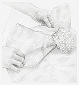 Black and white illustration of hands wrapping dried hydrangea flower in tissue paper (storing dried flowers)