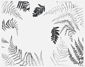 Black and white illustration of various dried leaves including ferns