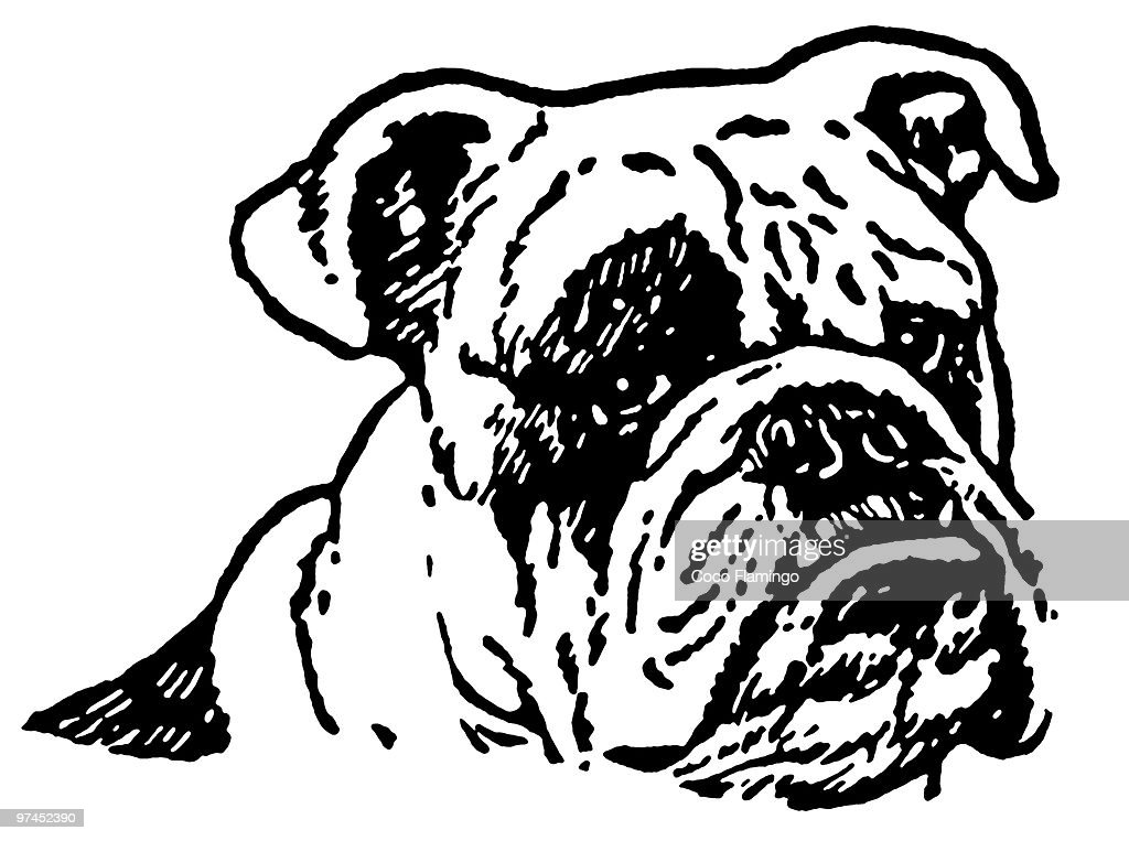 A black and white version of an unhappy looking Bulldog : Stock Illustration