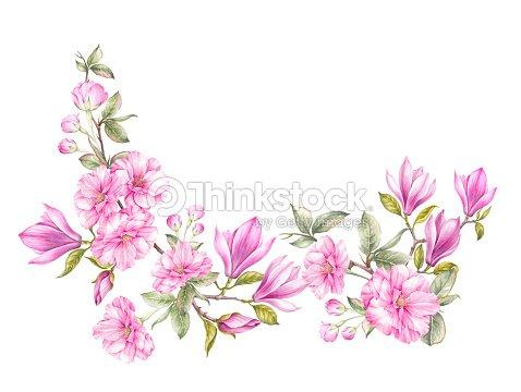 Flores Flor Magnolia Y Cerezo Japonés Ilustración de stock   Thinkstock