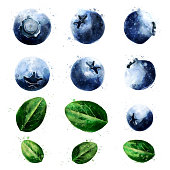 Blueberries, isolated hand-painted illustration on a white background