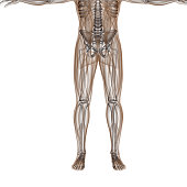 Bone structure of a human body