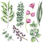 Botanical Set of Watercolor Herbs and Light Pink Flowers