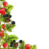 Botanical border of watercolor berries