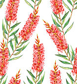Red and green Bottlebrush flower design on a white background. Seamless repeating pattern.