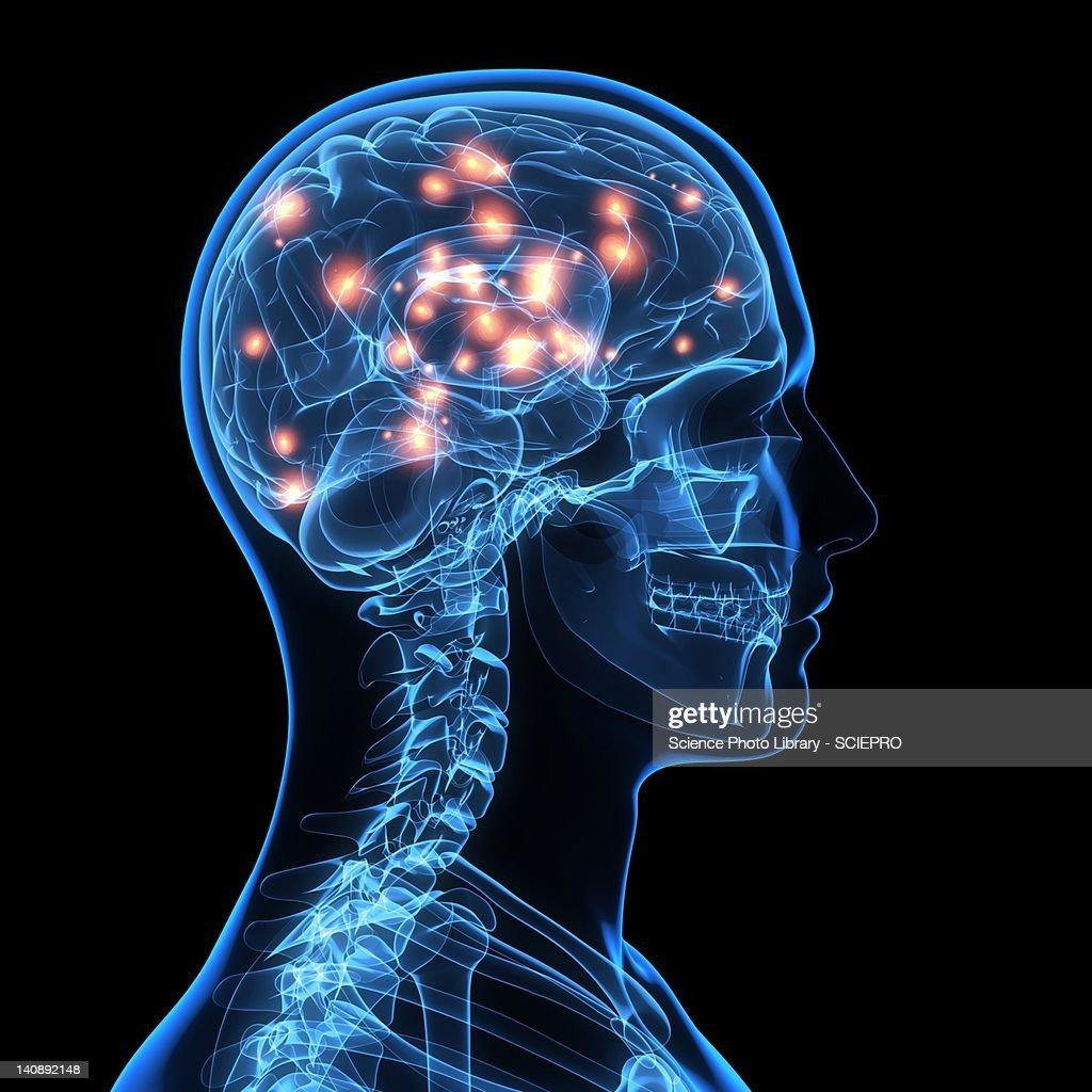 Brain activity, artwork : Stock Illustration
