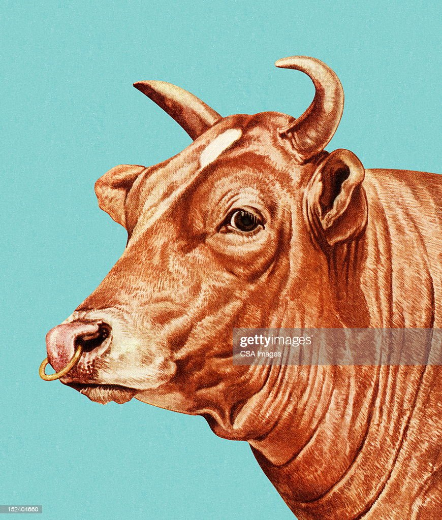 Bull with Nose Ring : Stock Illustration