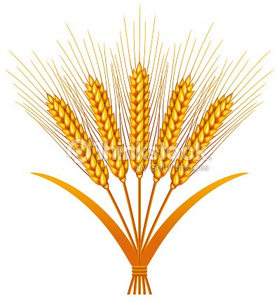 Bundles Of Wheat Stock Illustration | Thinkstock
