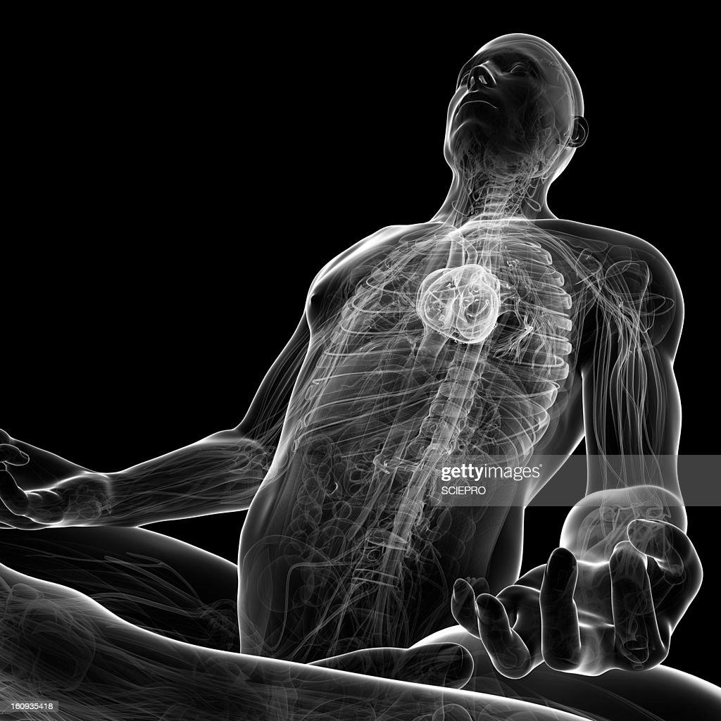 Cardiovascular system, artwork : Stock Illustration
