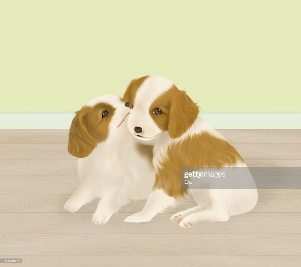 Cavalier King Charles Spaniel puppies on floor, side view : Stock Illustration