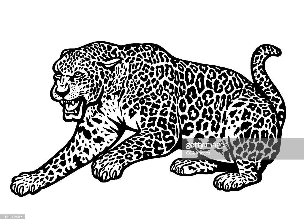 Cheetah : Stock Illustration