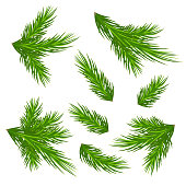 Christmas tree branches isolated on white background without shadow . Christmas decor. Nature in details. Drawing.