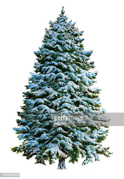 Christmas tree in snow