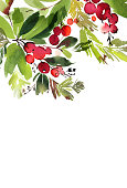 Christmas watercolor card with spruce and berries.