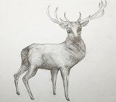 christmas-deer drawing