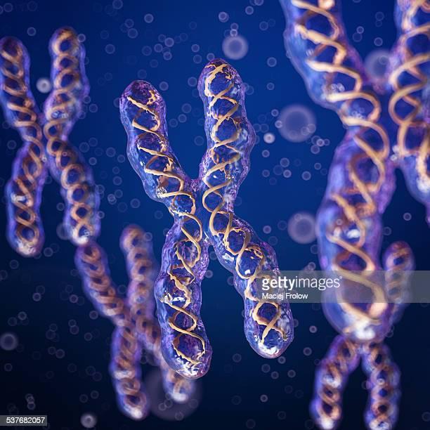 X Chromosomes digital artwork