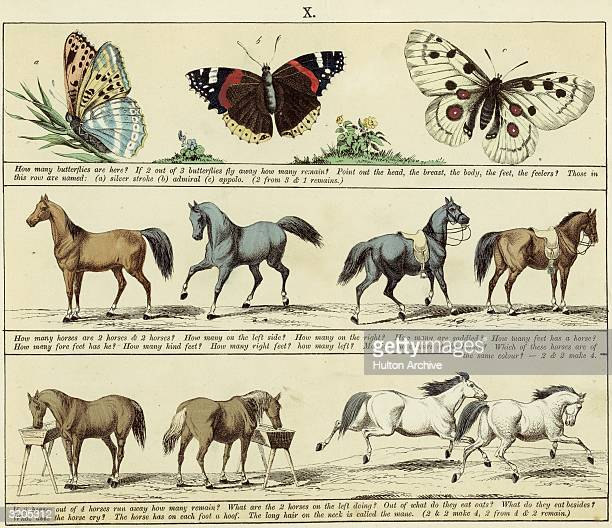 A page from a mid nineteenthcentury children's textbook with handtinted illustrations of butterflies and horses Each row of pictures is accompanied...