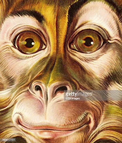 Closeup of a Monkey Face
