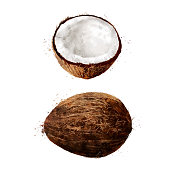 Coconut, isolated hand-painted illustration on a white background