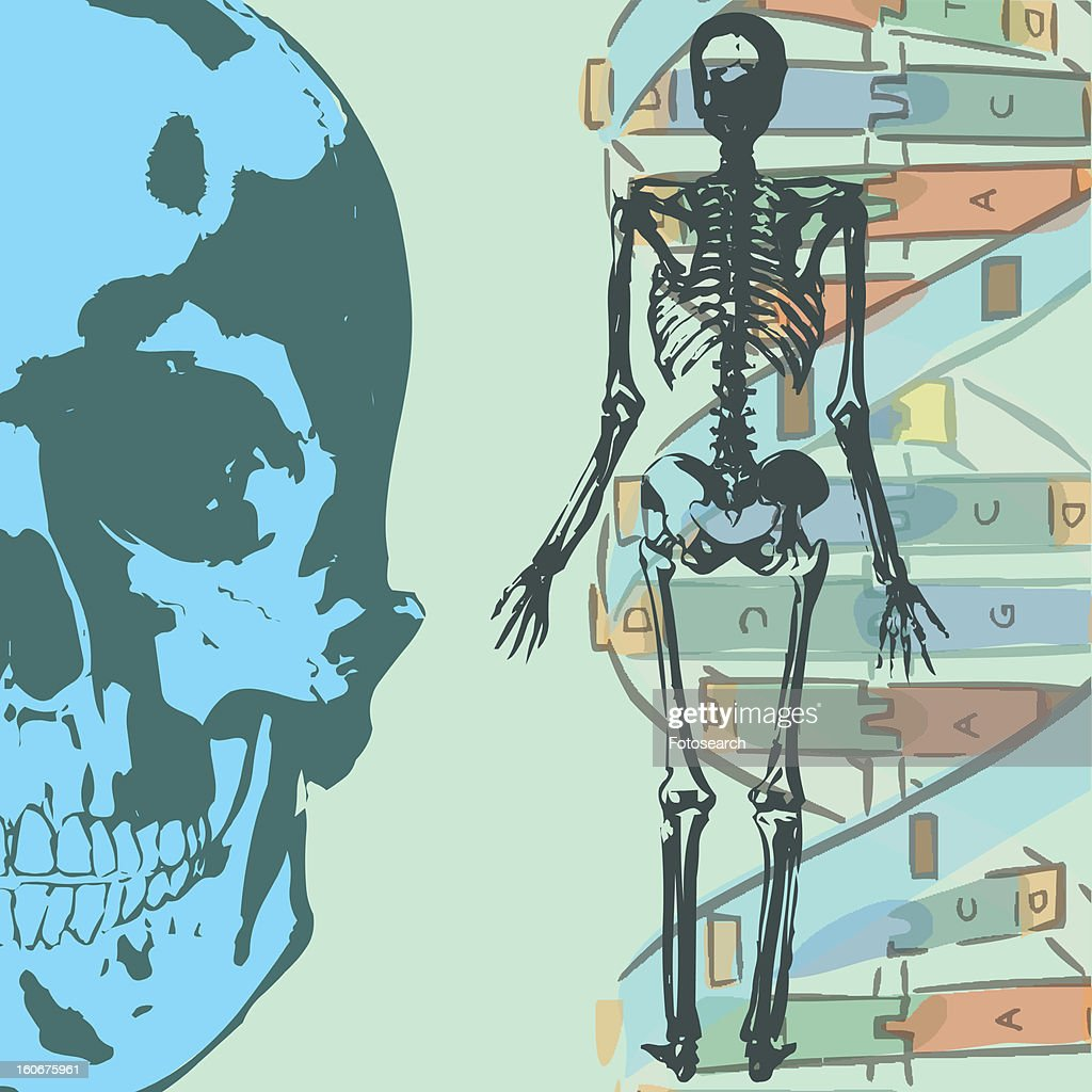 Collage with human skeleton and science elements : Stock Illustration